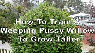 Pussy Full grown