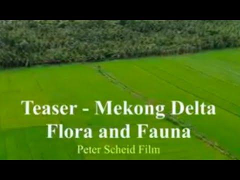 Mekong Delta Flora & Fauna - Teaser, Documentary Film Production Vietnam