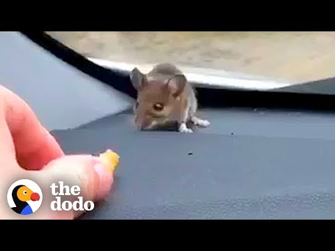 Guy Finds Mouse on His Car Dashboard   The Dodo