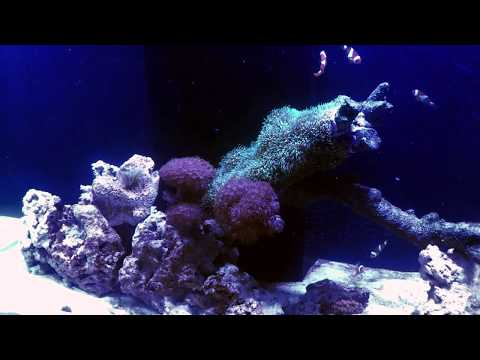 Explosive algae growth - Clean up and adding hermit crabs as clean-up crew.