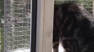 Вольер для кошки, выгул на окно, вольер антикошка, балкон для кошки