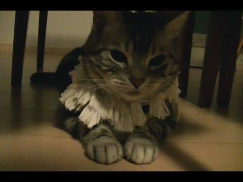 【猫記録325】地震発生で家族のもとへ駆けつける猫
