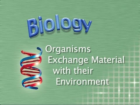 AS Biology Revision: Organisms Exchange Material With Their Environment