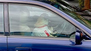 Pug Honks Car Horn When Owner Doesn't Return