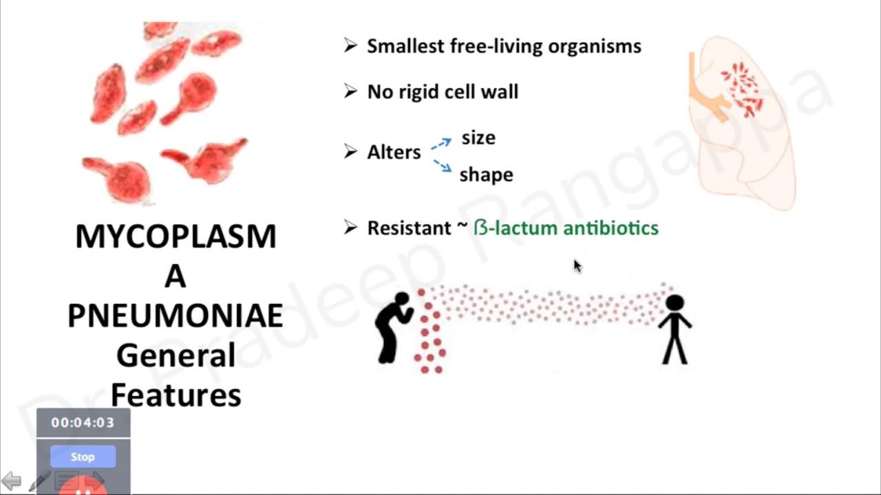 Hatékony féregtabletta emberben a helmintás betegségek epidemiológiája