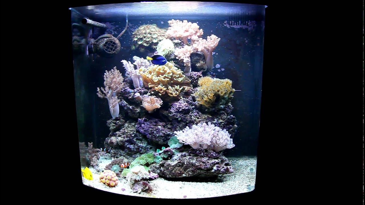 Sera 130l reef system youtube for Sera aquarium