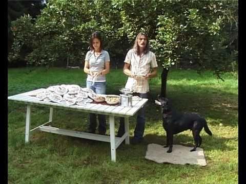 Hundeerziehung Rütter