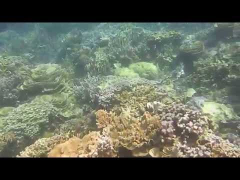Coral Reef in Karimun Java Indonesia