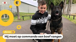 Is hond Nero de beste politiehond van Nederland?