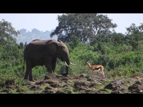 Kenya Safari 2014