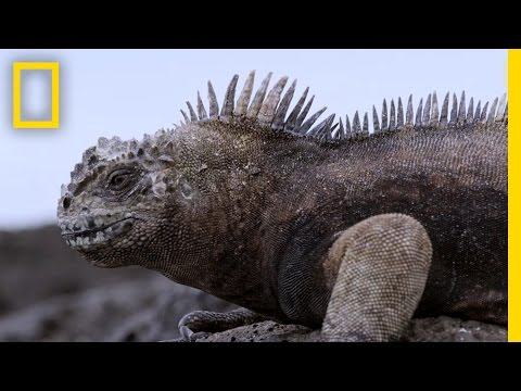 Experience the Beauty of the Galápagos' New Marine Sanctuary  National Geographic