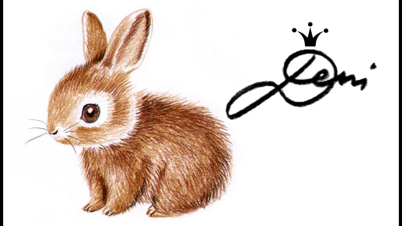 Kaninchen h schen zeichnen lernen in 3 farben how to draw a bunny with 3 colors - Hase zeichnen ...