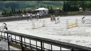 Więcej informacji: http://ogloszenia.re-volta.pl/konie/szczegoly/52...