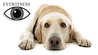 Все О Собаках | BBC Документальный Фильм | Eyewitnes | Dogs