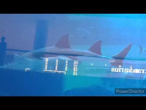 Dubai aquarium 2020