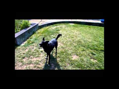 Trick Dog Guru