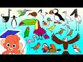 Animal ABC Learn Alphabet A To Z With 26 Cartoon Birds For Kids ABCD Wild Animals And Sounds mp3