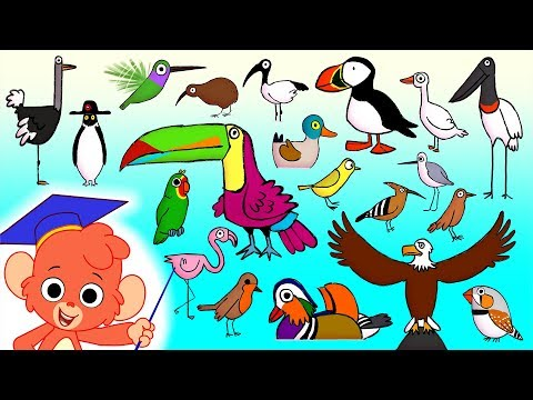 Animal ABC | learn alphabet a to z with 26 cartoon Birds for kids | ABCD Wild Animals and Sounds