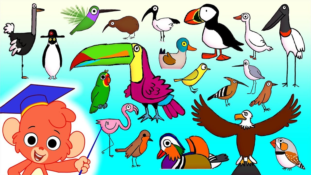 Bird Names With Letters