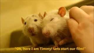 Timmy & Charlie, my beloved old rats