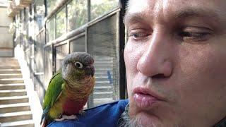 Попугаи - Жизнь в Китае #257