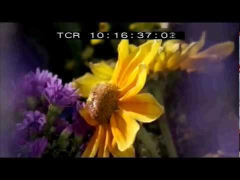 Vidéo BBC MONDES INVISIBLES