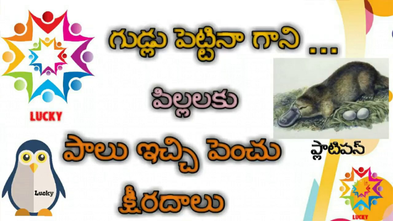 Mammals platypus animal in telugu education videos youtube mammals platypus animal in telugu education videos pooptronica