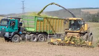 TATRA Phoenix AgroTruck and NewHolland FR600 Corn Silage 2017