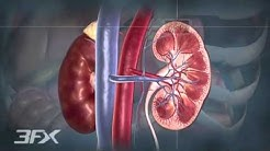hqdefault - Diabetes Affect Kidney