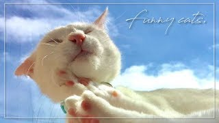 Cover images Funny Cats  面白いかわいい猫 귀엽고 재미있는 고양이 #Cat#Cute#猫