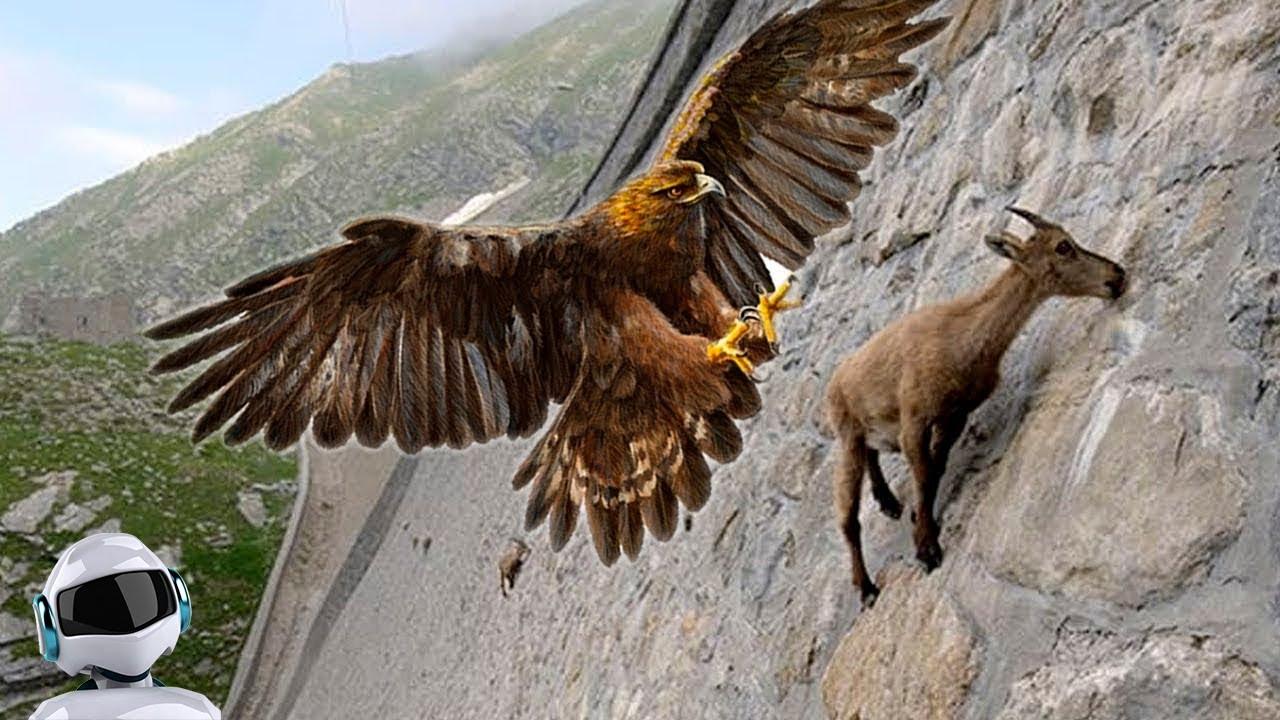 Хищные Птицы в Деле / На Что Способен Орёл, Сапсан, Ястреб