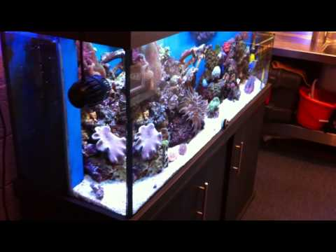 Man Cave come Marine Fish Room with my Reef Aquarium, ATI sunpower & Vortech MP40 pumps