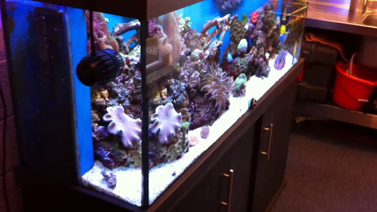 Man Cave Come Marine Fish Room With My Reef Aquarium Ati Sunpower