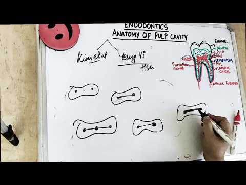 Anatomy Of Pulp (part 2) - Classifications Of Root Canal