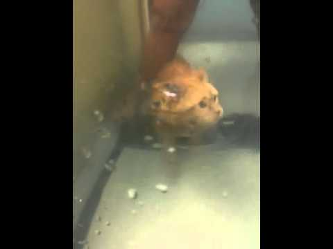 Youtube Cat Meows Underwater