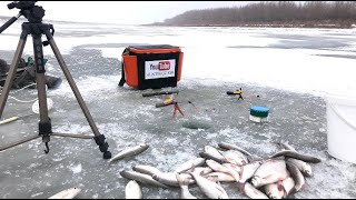 Зимняя рыбалка хороший клёв воблы