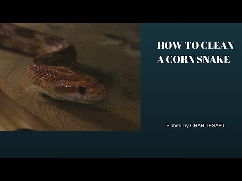 How to clean a Snake Tank.