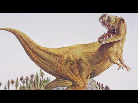 Scientists determine the T-rex couldn