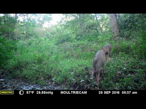 Trail Camera Videos 2016 June to December