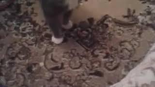Как мой кот реагирует на валерьянку)))