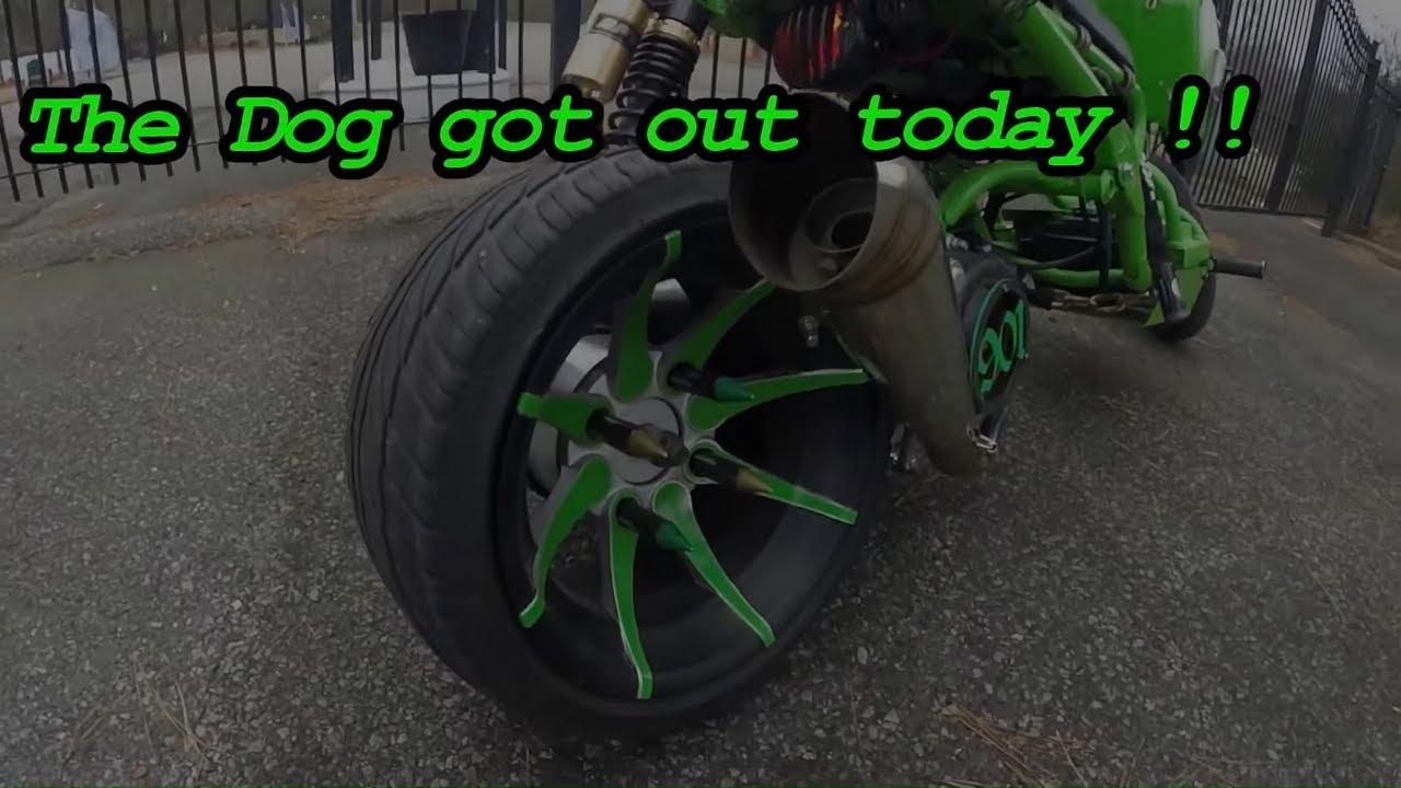 2015 150cc Icebear Maddog Scooter Youtube Mad Dog Wiring Diagram