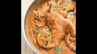 chó mèo hài hước gặp chủ lầy quẩy banh tik tok | cats tv