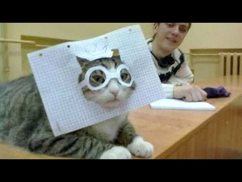 PETS & ANIMALS NEVER FAIL to MAKE US LAUGH - Best & funniest ANIMAL compilation