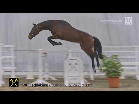 Verdener Auktion am 20. Januar 2018-Nr. 120 Tschaikowski v. Toulon-Stakkato