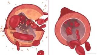 InnerOrigin Best Vitamin K2 Health Benefits