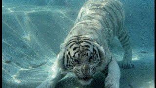 8 ужасных случаев нападения животных в зоопарке на людей
