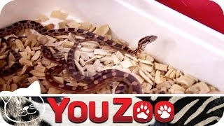 Tierhandlung XXL (2) | YouZoo