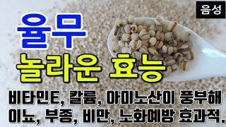 [#율무효과] 율무의 놀라운 효능 10가지 (비타민E,…