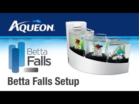 Aqueon | Betta Falls - Betta Desktop Aquarium Kit: Set Up