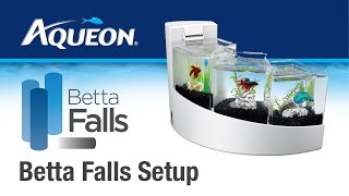Betta Falls Aquarium: Set Up